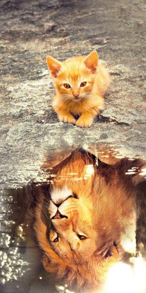cat-3809563_1920